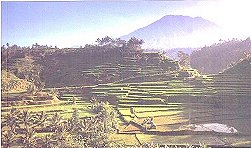 A terraced rice-field, typical scenery of the countryside.